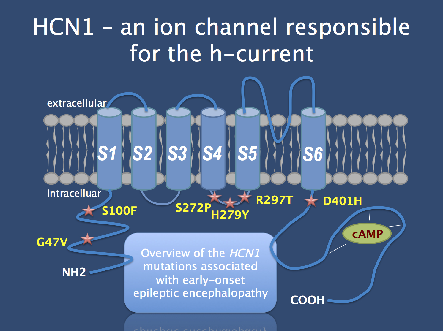 the discovery of a de novo mutation in potassium ion channel kcnc1 in progressive myloid epilepsy Prof sam berkovic positions a recurrent de novo mutation in kcnc1 causes progressive myoclonus epilepsy a potassium channel mutation in.