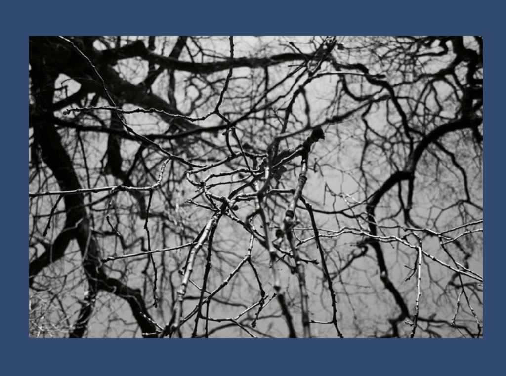 """Wooden neurons"" (from https://www.flickr.com/photos/gagilas/6787143138 under a Creative Commons License)"