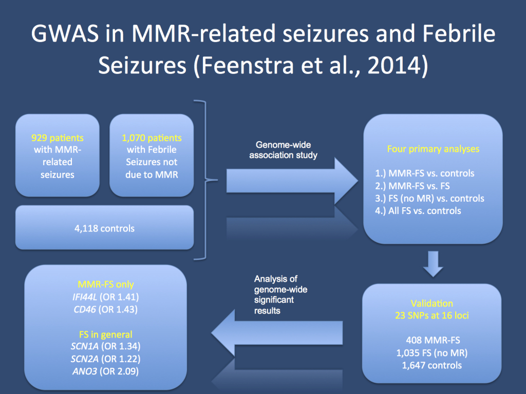The study by Feenstra and collaborators. The authors investigate patients with Febrile Seizures in the setting of MMR vaccination (MMR-FS) and Febrile Seizures without prior vaccination. Their study has a discovery and validation cohort. The genes that survived the strict correction for genome-wide significance included IFI44L, CD56, SCN2A, SCN1A and ANO3.