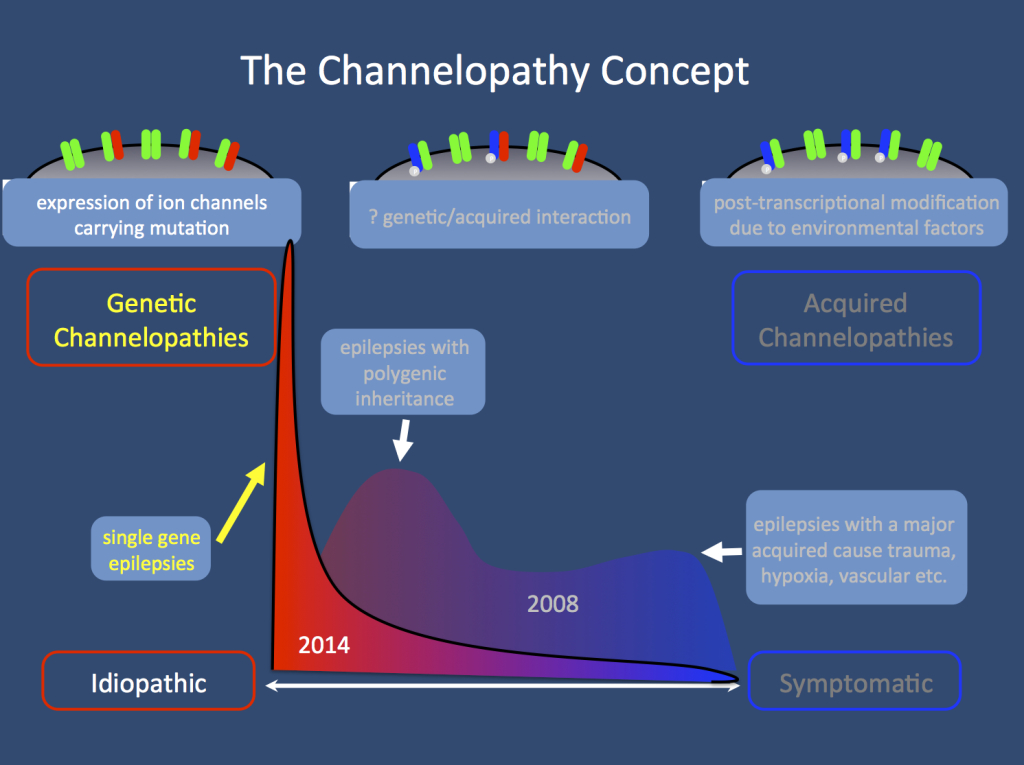 The Channelopathy concept 2008 and 2014. We have made remarkable progress in identifying ion channel gene mutation in monogenic epilepsy. This is much more pronounced than expected in 2008 and particularly the role of de novo mutations is surprising. However, there has been little progress in identifying the genetic architecture of complex genetic epilepsies other than finding several common variants through genome-wide association studies. Therefore, postulating that ion channel variants interact to contribute to the genetic architecture of human epilepsy is difficult, if not impossible to prove.