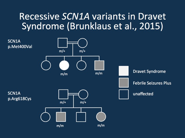 Two recessive families with Dravet Syndrome/GEFS+ and recessive mutations in SCN1A.