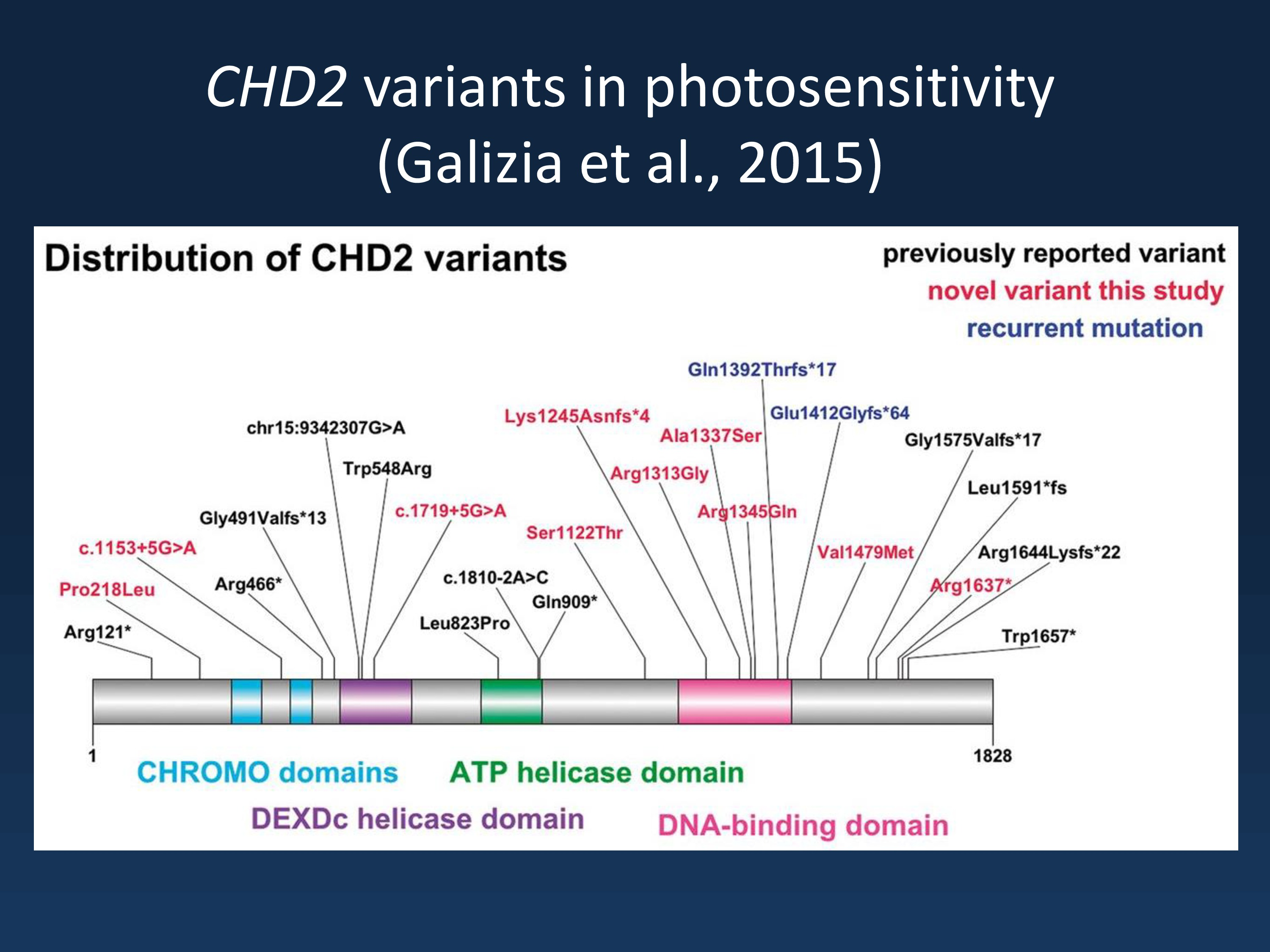 Schematic of CHD2 illustrating its functional (chromo, DEXDc, DNA-binding and ATP helicase) domains, the location of previously-reported variants and the unique variants in both cases and controls identified in this study (modified under a Creative Commons Licence from http://brain.oxfordjournals.org/content/early/2015/03/16/brain.awv052).