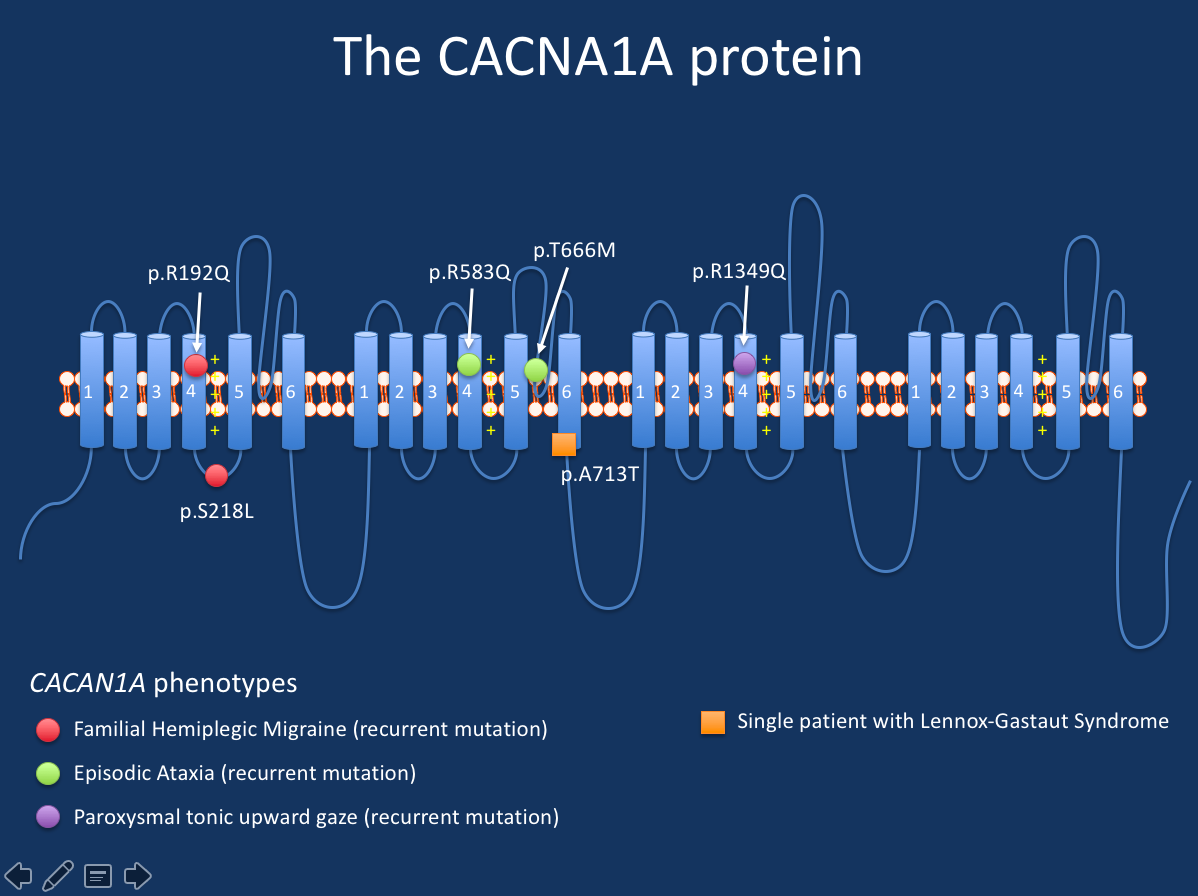 Some of the variants in CACNA1A mentioned in the current blog post.